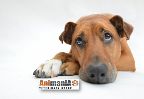 Animal Hospital Services in Fourways