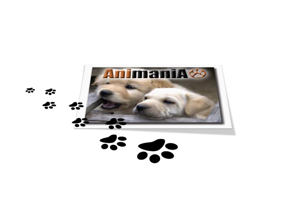 Canine Academy in Fourways